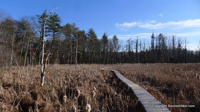 Boardwalk through Wetland in Mary French Reservation