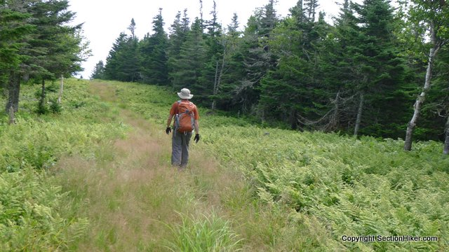 Kris hiking along the border swath between Quebec and New Hampshire