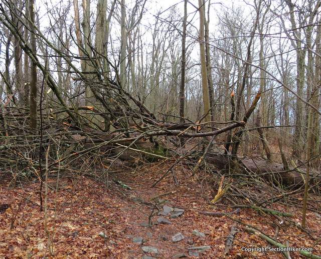Widow makers - falling trees and branches are a real danger. Make sure you camp in an area free of dead trees and overhead branches