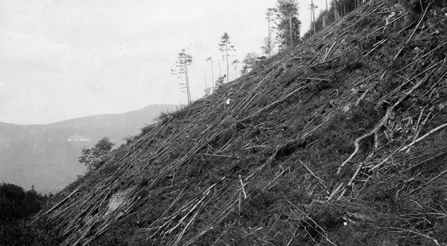 Slash remaining from cut-over land on mountainside, New Hampshire, circa 1910s.