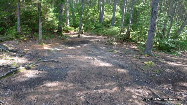 The barren ground of a pre-existing campsite