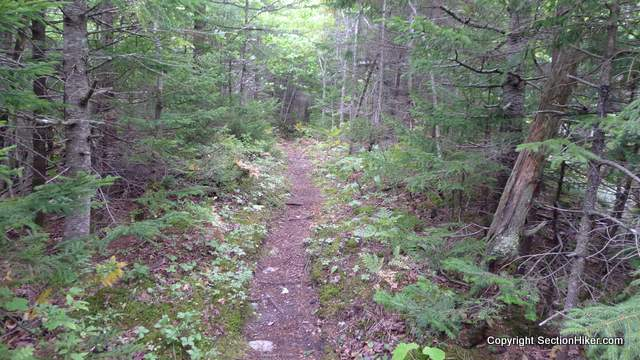 Spruce Hill Trail