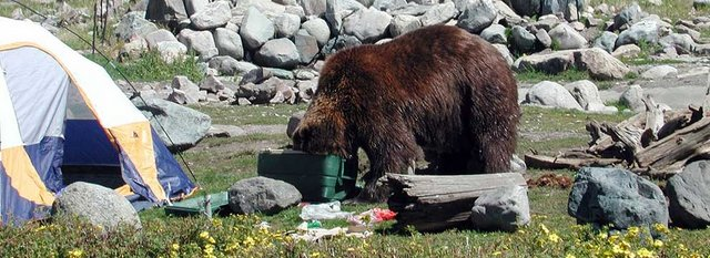 How To Protect Your Food From Bears Section Hikers