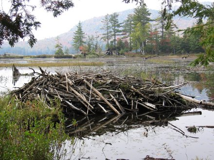 Beaver Lodge in the Adirondacks