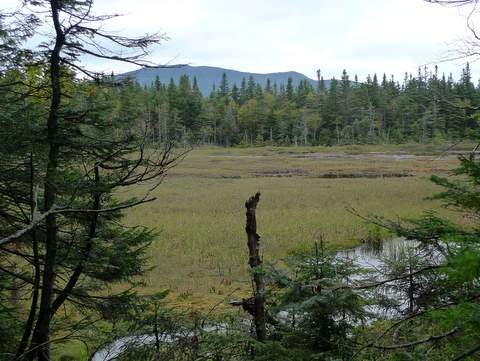 Bog along Reel Brook Trail
